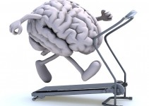 how exercise supports memory and brain function